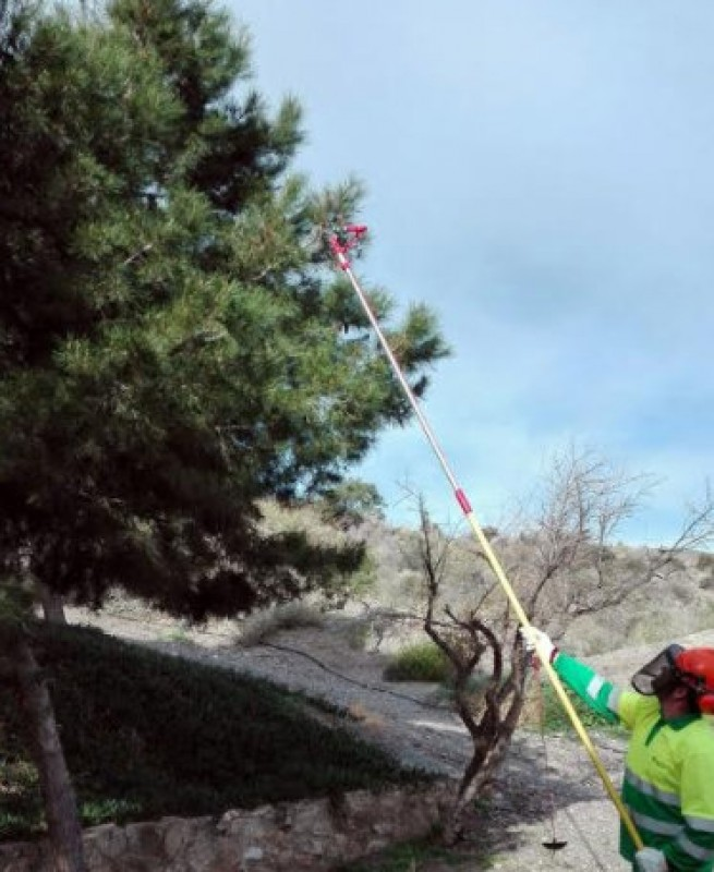 <span style='color:#780948'>ARCHIVED</span> - Águilas council workers seeking to eradicate pine processionary caterpillars