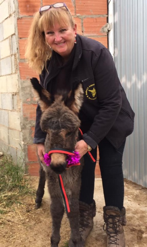 URGENT APPEAL  from Andreas Animal Rescue as coronacrisis deepens