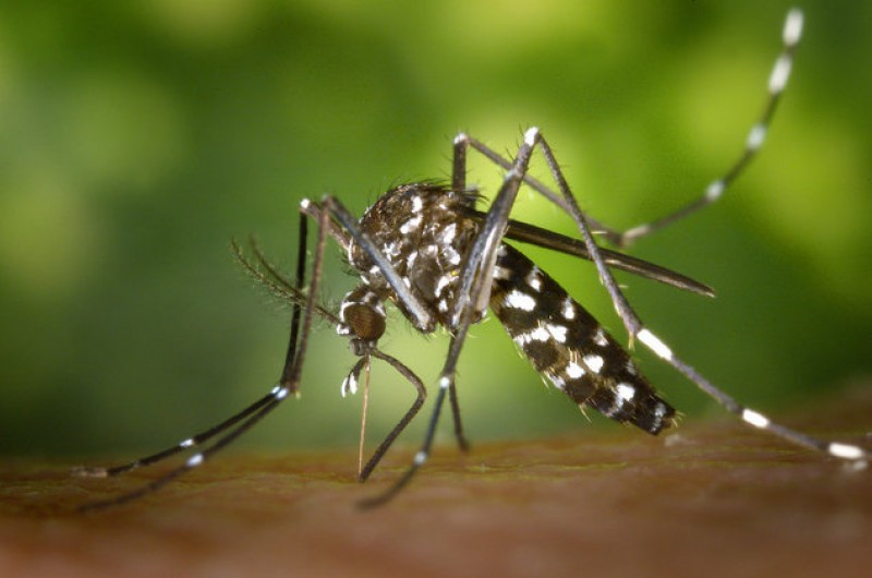 <span style='color:#780948'>ARCHIVED</span> - Murcia government creates tiger mosquito committee